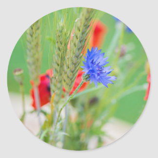 Bunch of of red poppies, cornflowers and ears classic round sticker