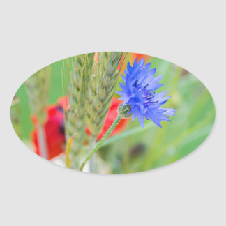 Bunch of of red poppies, cornflowers and ears oval sticker