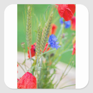 Bunch of of red poppies, cornflowers and ears square sticker