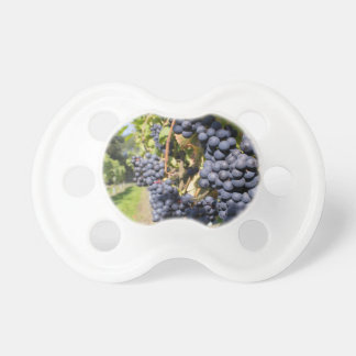 Bunches of blue grapes with path baby pacifier