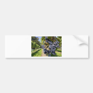 Bunches of blue grapes with path bumper sticker