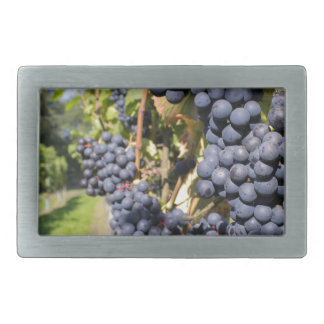 Bunches of blue grapes with path rectangular belt buckles