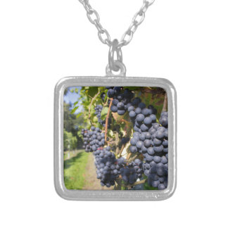 Bunches of blue grapes with path silver plated necklace