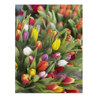 Bunches of colorful tulips postcard