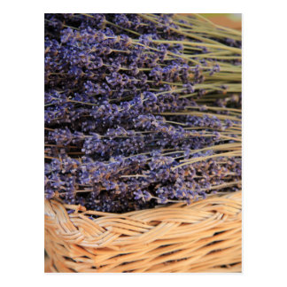 Bunches of Lavendel Postcard