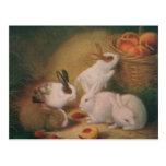 Bunnies Postcard
