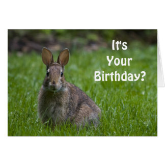 Bunny Birthday Card