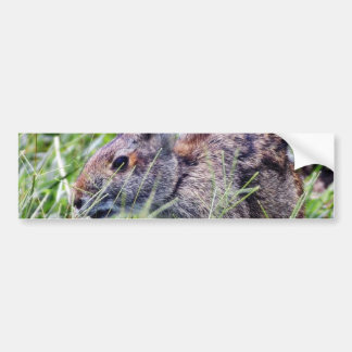 Bunny Bunnies Rabbits Bumper Sticker