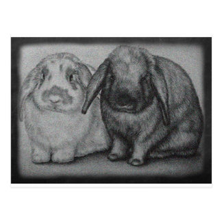 Bunny Drawing Rabbit Animal Chalk Art Postcard