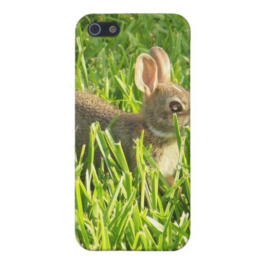 Bunny in Yard iPhone 5 Covers
