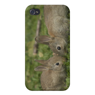 Bunny Love iPhone 4/4S Cases