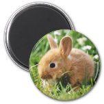 bunny magnet 7