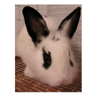 Bunny Postcard