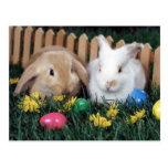 bunny postcard 1