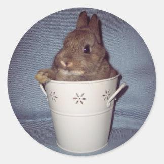 Bunny Rabbit Sticker