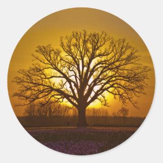 Bur Oak Sunset Classic Round Sticker