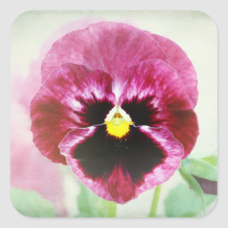 Burgundy Red Pansy Flower Square Sticker