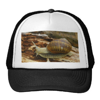 Burgundy Roman Edible Snail Helix Pomatia Trucker Hat