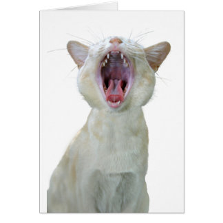 Burmese cat birthday card