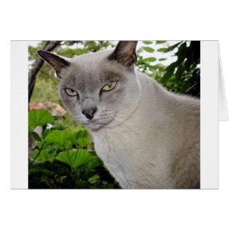 Burmese Cat Card