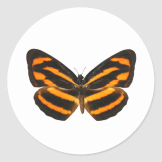 Burmese Lascar Butterfly Round Sticker