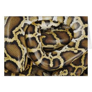 Burmese python card