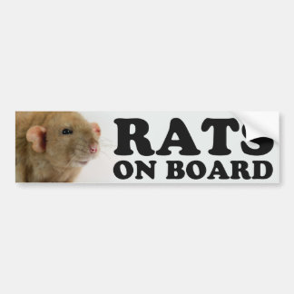 (Burmese) Rats one board Bumper Sticker