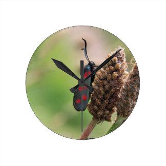 Burnet moth wallclock
