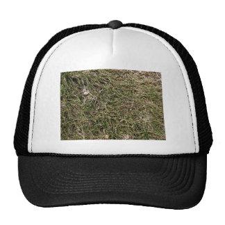 Burnt Grass Trucker Hat