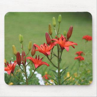 Burnt Orange Asiatic Lilies Mouse Pad