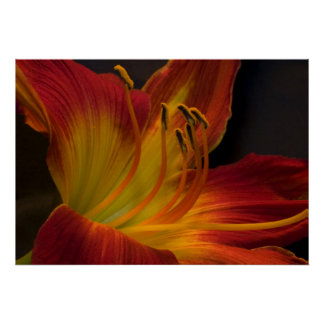 Burnt Orange Day Lily Poster