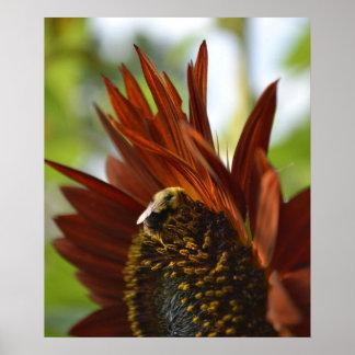 Burnt Orange Sunflower Poster