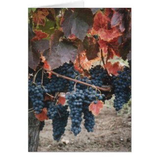 Burnt Red Leaves & Grapes Card