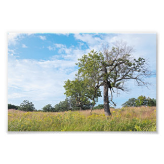 Burr Oak Trees and Prairie Photo Print