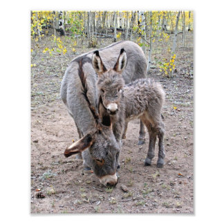 Burro and Baby Photo Print