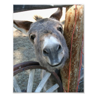 Burro Over Wagon Wheel 8x10 Photo Print