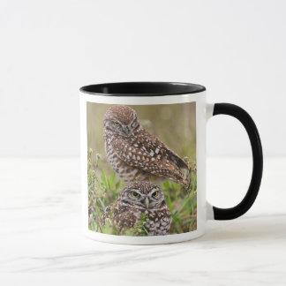 Burrowing Owl, Athene cunicularia, Cape Coral, Mug