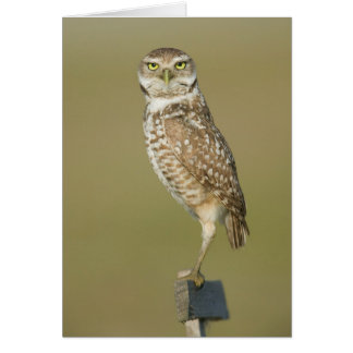 Burrowing Owl - Here's Looking at You Card