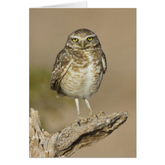 Burrowing Owl on a stick Card