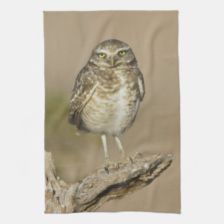 Burrowing Owl on a stick Kitchen Towel