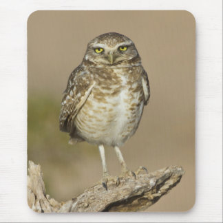 Burrowing Owl on a stick Mouse Pad