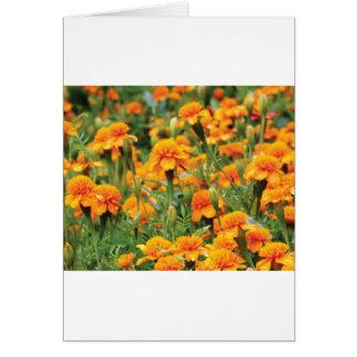 burst of orange color card