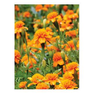 burst of orange color postcard