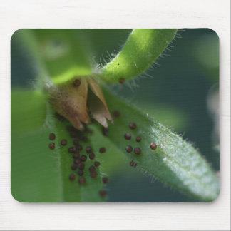 Burst Petunia Seedpod Mousepad