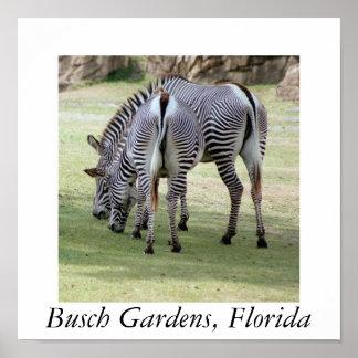Busch Gardens, Florida Poster