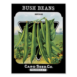 Bush Beans Card Seed Co. packet Vintage Fredonia Poster