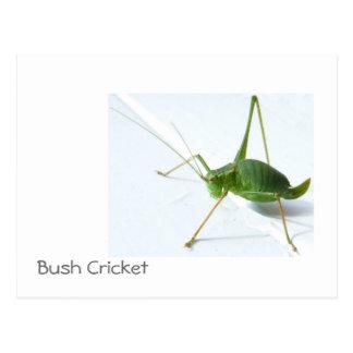Bush Cricket Postcatrd Postcard