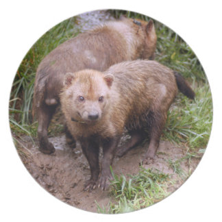 bush-dog-b-2 dinner plates