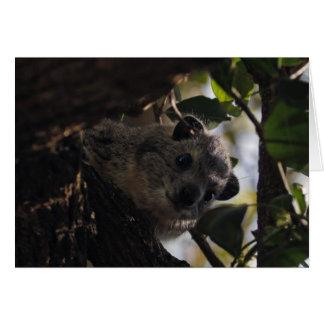 Bush Hyrax Card