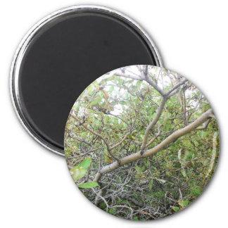Bushes 2 Inch Round Magnet